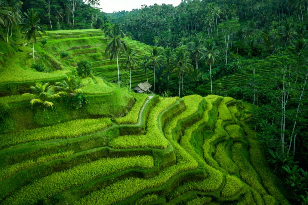 Tegalalang Rice Terrace - Must not to be missed when travelling to Bali, especially UBUD.