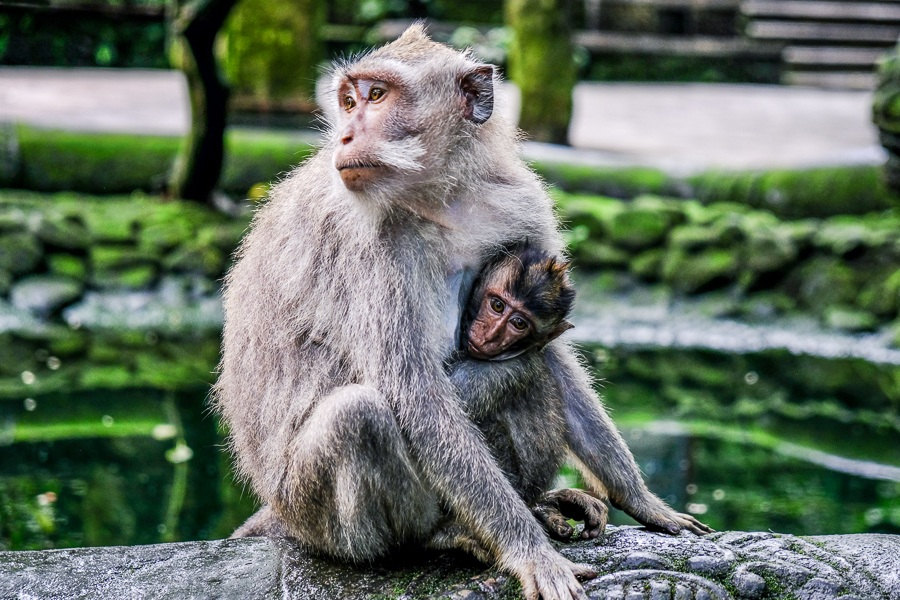 Ubud Monkey Forest, the best place to visit while in Bali